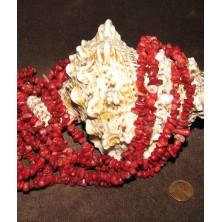 سنگ مرجان (راف گردنبندی)