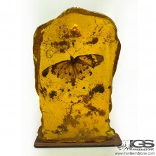 سنگ کهربا پروانه دار
