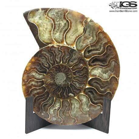 سنگ آمونیت فسیل طبیعی آمونیت fossil ammonite