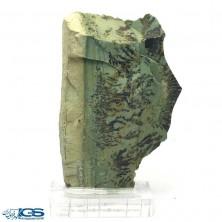 سنگ کلکسیونی دندریت Dendrite فسیل شجر دار