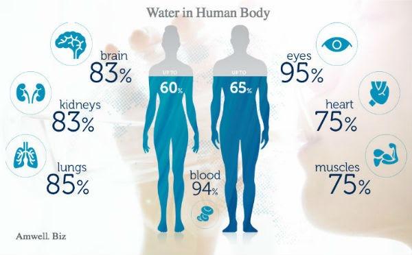 آب موجود در انسان